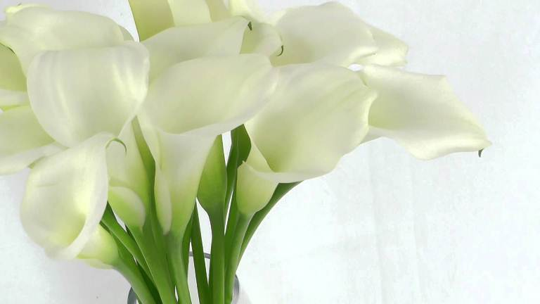 cup-shaped ivory-white calla lilies